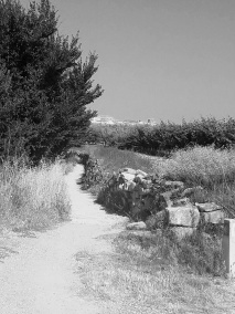 Camino F