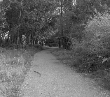 Camino after El Jardin